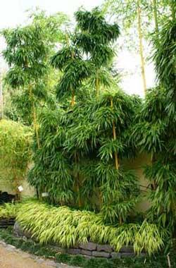 bambus zentrum rhein main bambusgarten langenselbold. Black Bedroom Furniture Sets. Home Design Ideas